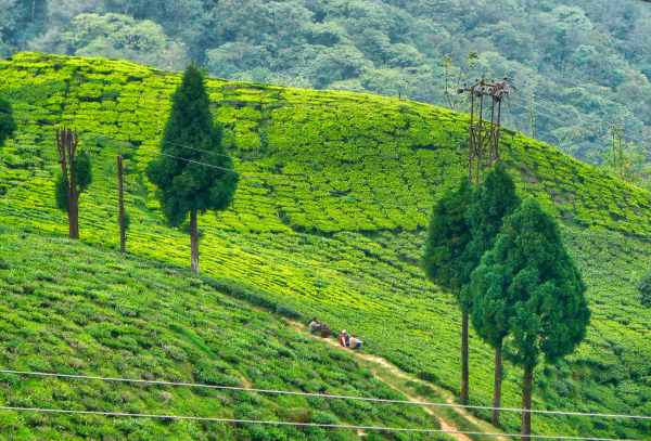 Agricultural hills in India