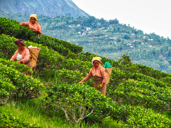 Three woman working in the hills of India